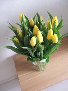 Spring_has_come_021