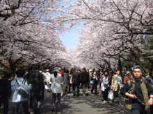 Ueno_park_007